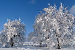 Winter Wonderland (fluxxus1) Tags: blue trees winter light sky sun white snow tree nature clouds forest landscape geotagged lumix europe frost day shadows belgium belgique crystal hiver perspective panasonic explore wonderland venn hautes fagnes hoar wallonie hautesfagnes hohes flickrsbest baraquemichel mywinners abigfave platinumphoto lx3 wallonne favemegroup3 lumixaward flickrestrellas phvalue worldclassnaturephoto regionwide