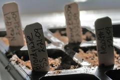 seeds 3