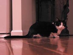 Freddy (iandavid) Tags: cat floor freddy eulogy