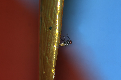 la agonía de las moscas
