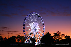 Wheel of Perth (Adam Dimech) Tags: city sky cloud wheel night evening amusement twilight ride dusk australia ferris perth ferriswheel wa westernaustralia theesplanade wheelofperth