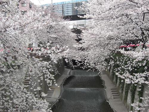 meguro-river1