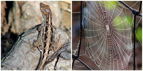 On the backs of lizards and and spun along the edge of a spider web...