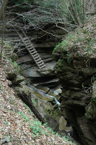 Ladders in Bear Hollow