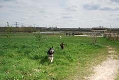 Dog Chase 2
