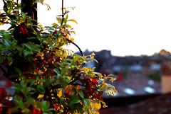 natura e civilt (maryzar) Tags: terrazzo pianta dallalto complementari nikond80 riflettere