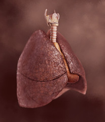lungs (lostkat) Tags: illustration lungs medicalart