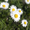 daisy test K02 f/5.6