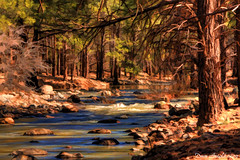 Kaibab National Forest (Dave Arnold Photo) Tags: pictures arizona usa southwest west tree creek forest canon river us photo desert image photos arnold picture az pic images photograph western sw southwestern ariz swusa kaibab kaibabnationalforest westernusa davearnold davearnoldphoto davearnoldphotocom