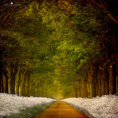 Path of Joy (larsvandegoor.com) Tags: road trees art landscape vanishingpoint path thenetherlands cowparsley treelined idream topseven larsvandegoor thesecretlifeoftrees