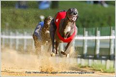 Greyhound: Kaboca's Boomerang; NL