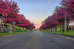 Tree-Lined Buelevards (theskyhawker) Tags: sunset und university north grand forks dakota hdr grandforks 4exp