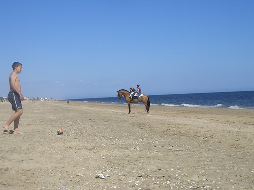 Un caballo buscando coquinas