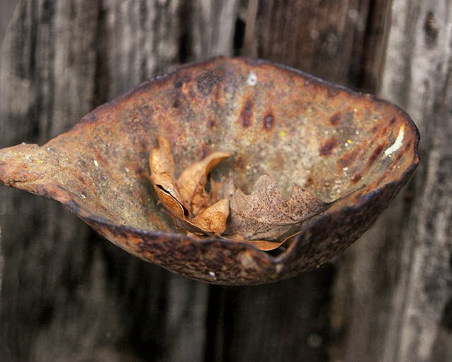 Rusty Ladle and Leaves