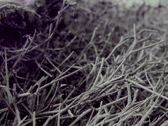 ... (~ naim) Tags: wood closeup spring branch dof bokeh web dry tehran khordad 1388 photoscape sinak ~vivairan~