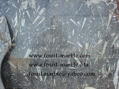 best fossils and fossilized marble (97) (crafts jama3 lafna) Tags: crafts marrakech marble fossilized jamaa lafna