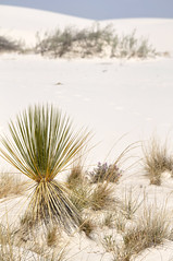 White Sands National Monument, New Mexico (ap0013) Tags: new usa white newmexico monument america mexico nikon whitesands dunes national nm sands nationalmonument sanddunes whitesandsmisslerange d90 nikond90
