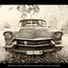 Beautiful old Cadillac Eldorado