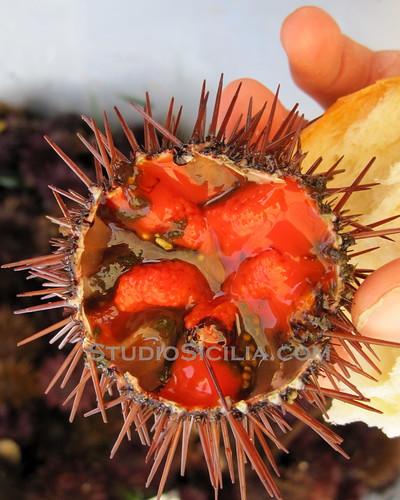 Sicily: Sea Urchin Sashimi