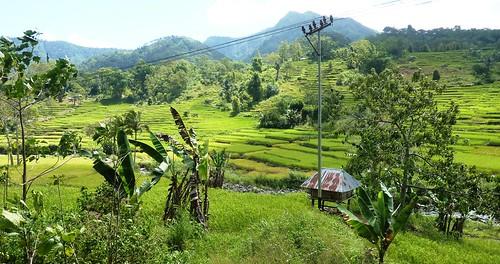 Flores-Moni-Ende- Route (50)
