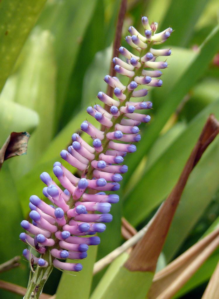 Matchstick_Flower