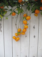california_oranges