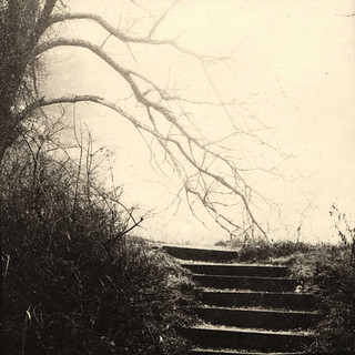Foggy steps