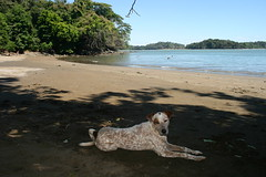 Zorro waits patiently till we are finished at the beach