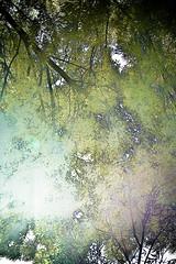 THINGS I SEE. FALL SUNSHINE -STREET VANCOUVER .FFX © florbela's fotographix-1184 (florbelas fotographix) Tags: trees light sky macro tree verde green fall hockey nature skyline vancouver graphicart soft different digitalart creative artnouveau overexposed overexposure postprocessing grn ggt digitaldarkroom twitter macromondays georgeousgreenthursday freetwitterwallpaper ffxwallpaper ffxtwitterwallpaper