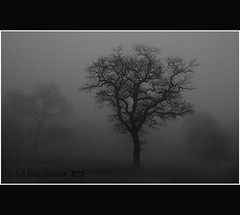 Trees Shrouded in Mist - Camperdown - Dundee - Scotland (Magdalen Green Photography) Tags: trees blackandwhite bw nature misty scotland moody dundee scottish creepy tayside coolness camperdown haar camperdownpark dsc4374 iaingordon coolmistytrees mistshroudedtrees