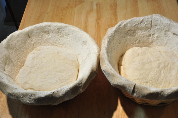 bread dough stretched in proofing basket