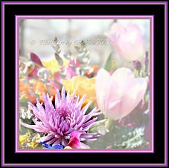 Outstanding (Rebel XT Shots / Bobbie) Tags: flowers art photoart mybestphotos reblext multimegashot magicdonkeysbest finephotoshopdesign worldclassnaturephotos