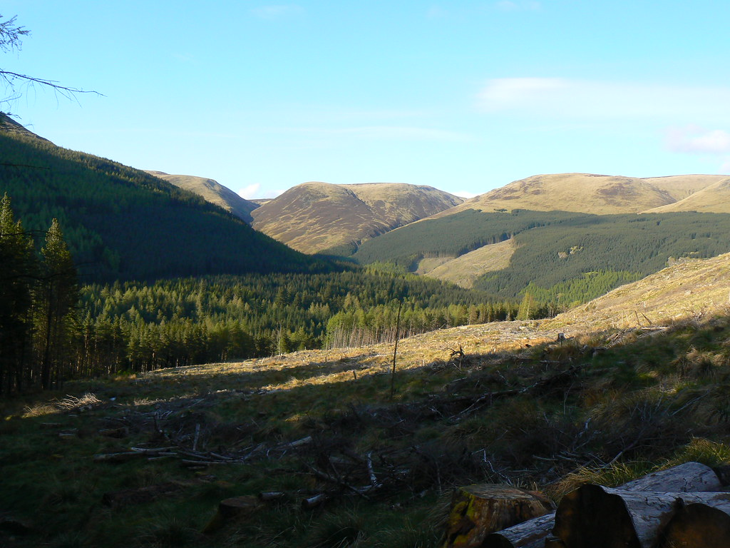 Glendoll Forest