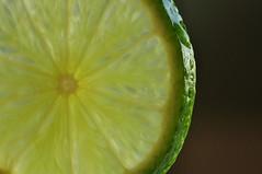 Slice of lime (Kathymtb) Tags: macro green fruit slice citrus lime macrolife