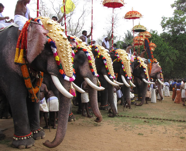 thrissur pooram - Elephants at Ilanjithara Melam