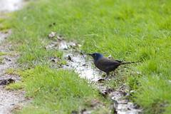 Bird (kenyaya) Tags: lake toronto ontario canada bird beach nature birds canon rebel fly xs brimley 1000d