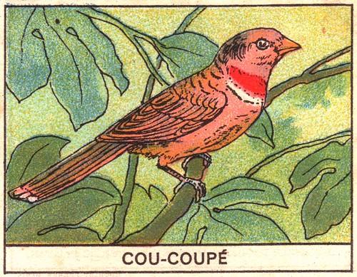 oiseaux mart 1