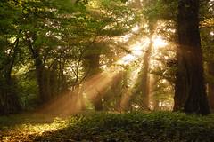 First Light (Stu Meech) Tags: morning trees light mist sunrise nikon bath stu somerset down through 1855mm coming meech d40 claverton