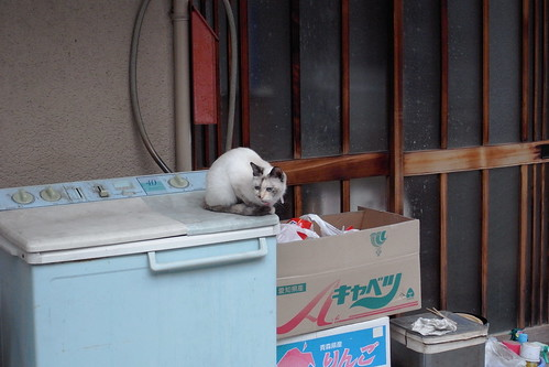 Today's Cat@20090605