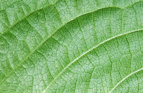 Leaf Texture 02