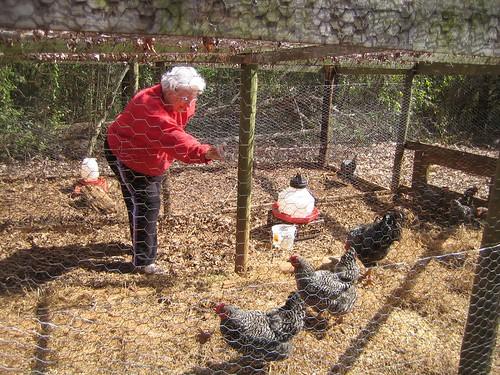 GA-March2009-ChickenCoop