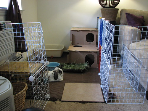 clean area with new bunny fort
