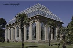 The Temperate Palm House at Royal Botanic Gardens,Edinburgh (MarkyD31) Tags: palms edinburgh greenhouse glasshouse palmhouse royalbotanicgardens