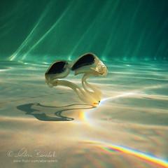 google my goggles (Ąиđч) Tags: light shadow macro verde green andy water pool underwater andrea bottom ombra goggles andrew piscina rays sunrays acqua fondo luce raggi benedetti sottacqua occhialetti ąиđч canonwpdc17underwaterhousingforcanonsd870isdigitalcameras