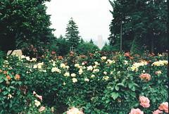 (earthtoandrea) Tags: oregon portland pentaxk1000 pdx washingtonpark upa2009