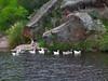 Paisaje cordobes (aire fuego tierra agua) Tags: argentina ducks lagoon cordoba laguna patos canards anatre villacarlospaz mywinners abigfave lacune