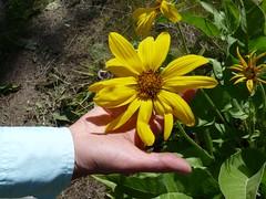 One big bloom!
