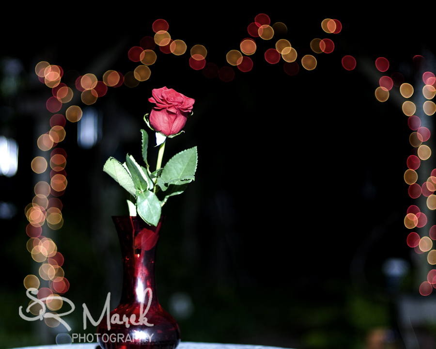 A rose and some bokeh