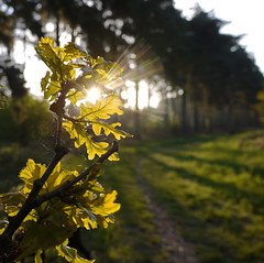 Sunlight (yvonnepay615) Tags: uk trees nature leaves woodland lumix spring woods shadows forestry postcard norfolk panasonic g1 sunrays eastanglia swaffham 1445mm 43365 esenciadelanaturaleza
