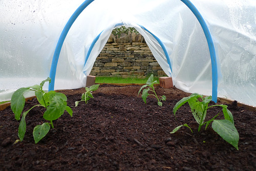 Fresh implants to the polytunnel